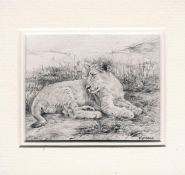 116 Lion Cub by Karen Bell in Pencil