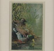 65 Mallard Ducks by Judy Proctor Acrylic